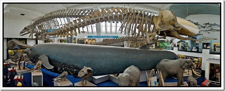 panorama wieloryba