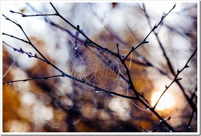 Barwy jesieni 2015_80